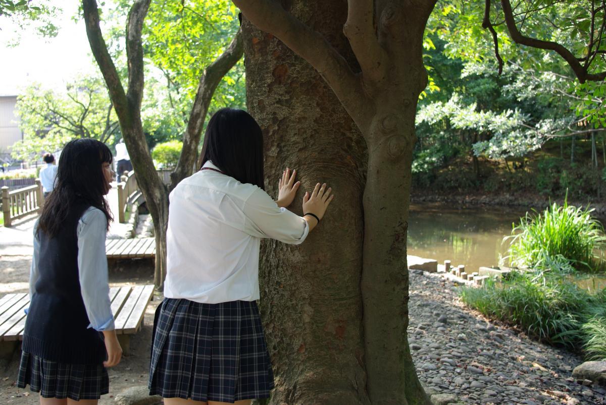 「私の木」ワーク